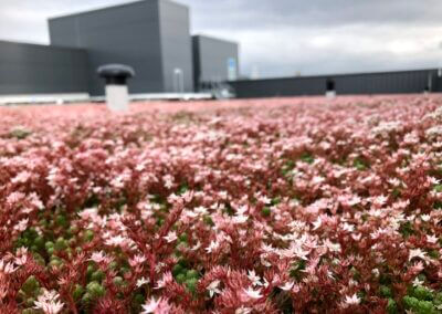 Data Centre with green MOY roof